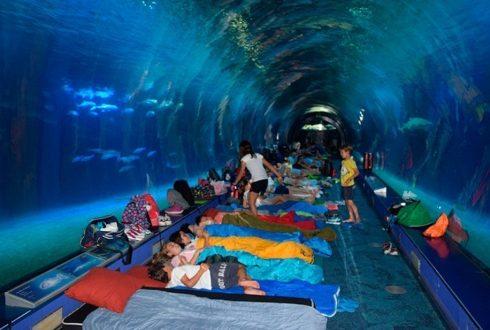 dormir-con-tiburones-en-oceanografico